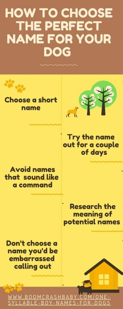 One syllable boy names for dogs infographic